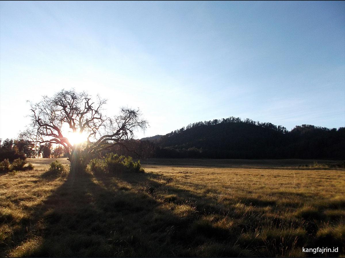 Savanna Cikasur di Pagi Hari, Sepenggal Surga di Dataran Tinggi Hyang, Gunung Argopuro