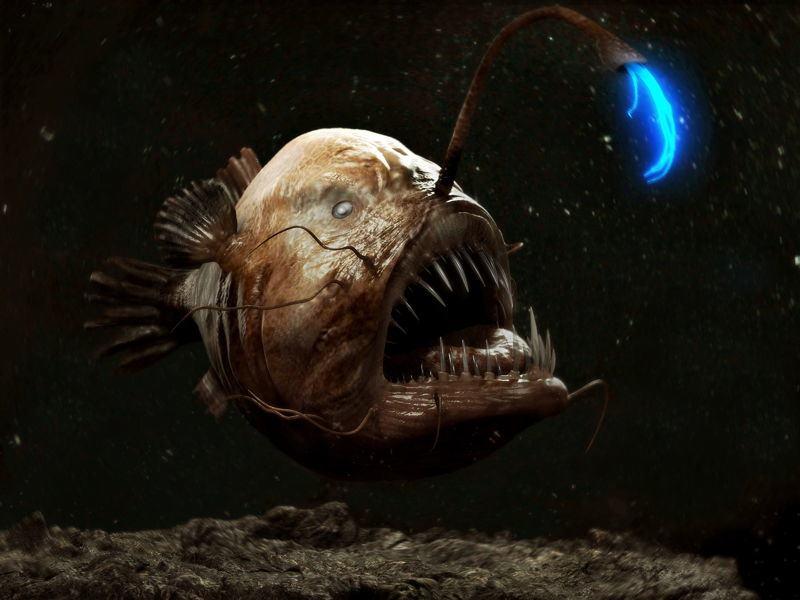 Male Anglerfish
